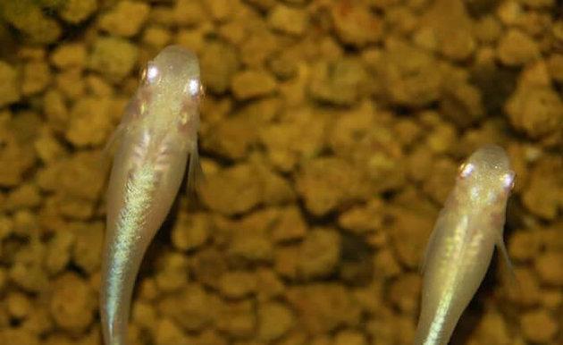 水面 いる メダカ に メダカ飼育水槽の水面に油膜ができる!予防するには?